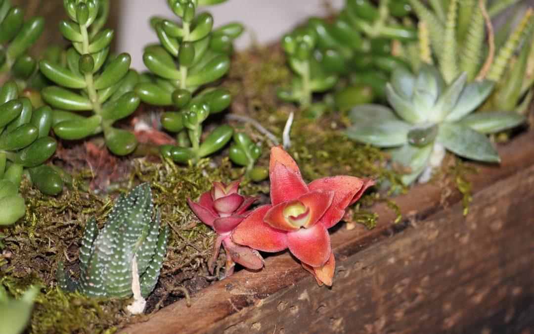 Matériaux bon marché pour améliorer l'apparence de votre jardin !