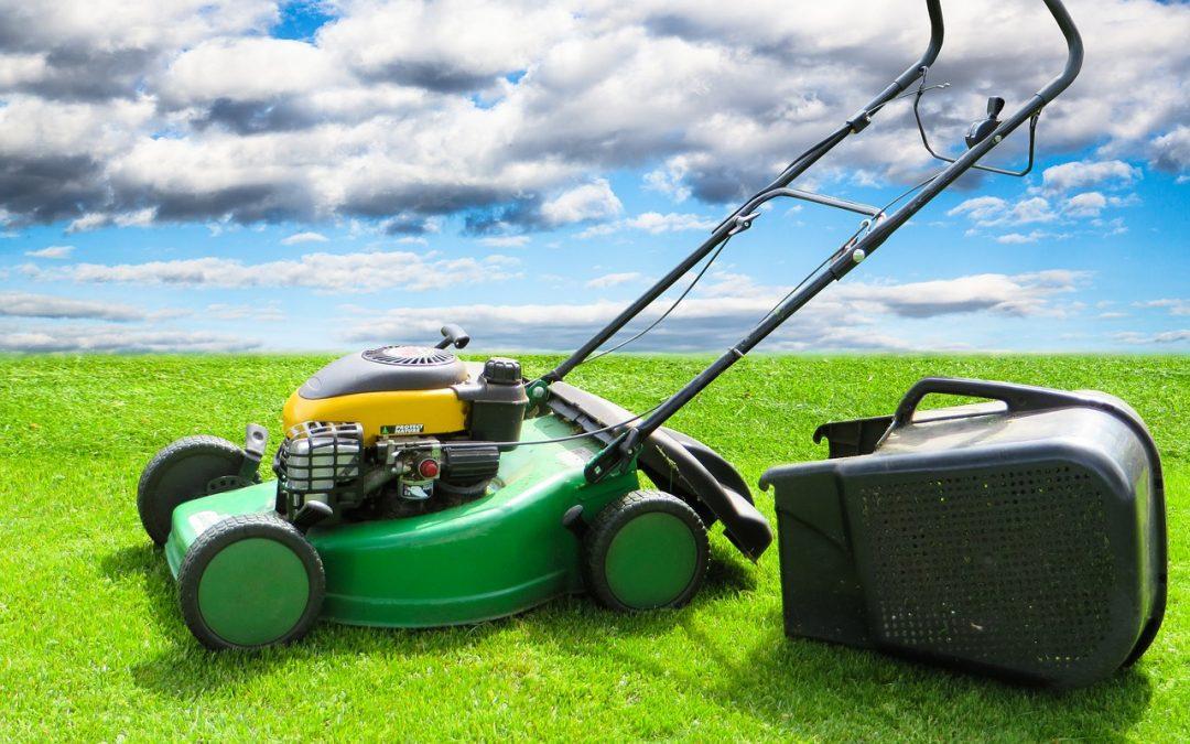 5 façons de garder votre gazon vert toute l'année !